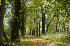 Sunny parthway in autumn forest Royalty Free Stock Photos