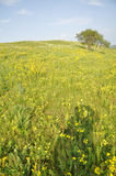 Sunny pasture Stock Image