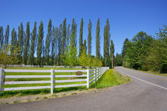 Sunny pasture rural road Stock Image