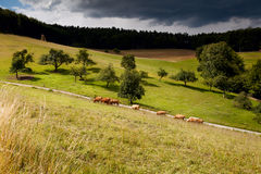 Sunny pasture before storm Royalty Free Stock Images