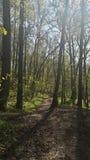 Sunny path Stock Photos