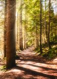 Sunny path in a forest during day time stock photos
