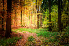 Sunny path in the forest, Europe Stock Photo