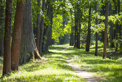 Sunny path in the forest... Stock Image