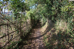 Sunny Path Royalty Free Stock Images