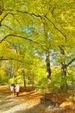 Sunny path in park Stock Photo