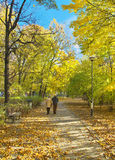 Sunny path in park Royalty Free Stock Image
