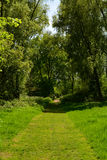Sunny path to the wooden bridge in the forest with tall trees in summer, Waltham Abbey, UK Stock Image