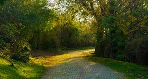 Sunny Pathway i parkera royaltyfri fotografi