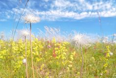 Sunny picture of wildflowers Stock Photography