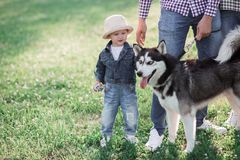 Sunny pictures of a happy little girl with a dog. Walk on the grass, the sun is shining Royalty Free Stock Photo
