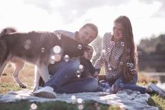 Sunny pictures of a happy married couple with a dog and a child. Lie on the grass, the sun is shining royalty free stock image