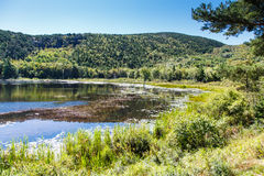 Sunny Pond in Maine Wilderness Stock Photography