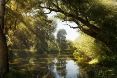 Sunny pond Stock Photos