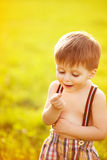 Sunny portrait of child. Portrait of adorable little boy starring at ladybug royalty free stock photography