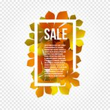 Sunny poster, colorful chestnut leaves background in rectangular white frame with promo info about autumn season Royalty Free Stock Photography