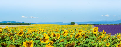Sunny Provence Fotografia Stock Libera da Diritti