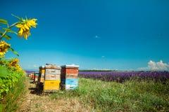 Sunny Provence Fotografie Stock Libere da Diritti