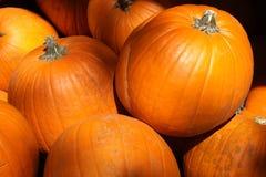 Sunny Pumpkins Stock Image