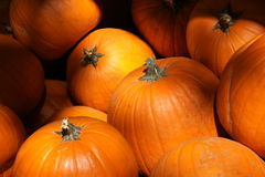 Sunny Pumpkins Royalty Free Stock Image