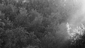 Sunny Rain Black White Contrast video estoque