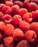 Sunny raspberries. Much of sweet bright berries royalty free stock images