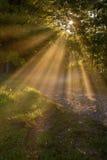 Sunny ray spring morning Royalty Free Stock Photo