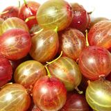Sunny red gooseberry in closeup. At white background Stock Images