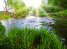Sunny river Stock Photography