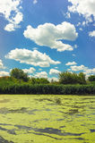 Sunny river with duckweed Royalty Free Stock Photography