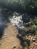 Sunny River View fotos de stock