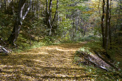 Sunny road. In the autumn, beech forest Stock Photo