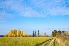 Sunny road in autumn field Royalty Free Stock Photography