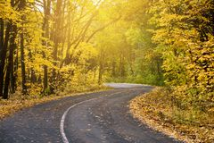 Sunny road in autumn forest. Seasonal landscape with foliage and trees, travelling picture Royalty Free Stock Photos