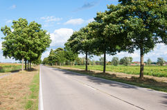 Sunny road in a Dutch rural area. Long and sunny road with a row of trees in a rural dutch landscape in summertime Royalty Free Stock Images