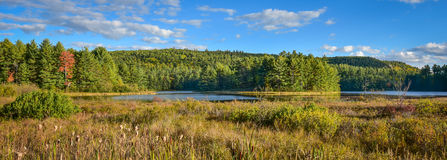 Sunny roadside view of marsh and woodland wilderness country.   Warm summer day in boreal forest wilderness in Ontario Canada. Sunny Summertime marsh wetlands Stock Photo