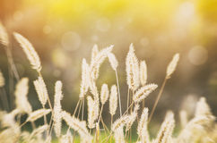 Sunny Rural Meadow Stock Images