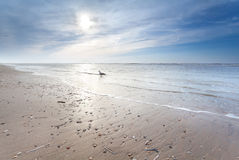 Sunny sand beach in North sea Stock Photography