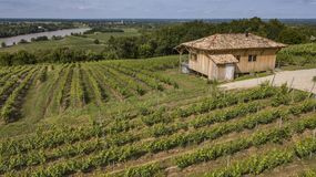 Sunny scenery with small hut in a vineyard at late summer time stock images