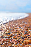 Sunny sea shore. In sunny day waving sea shore with wet shells Stock Image