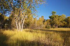 Sunny and Secluded Meadow Stock Image