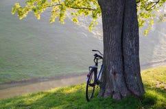 Sunny September-Morgen im Park Nesvizhsky Lizenzfreie Stockfotos