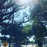 Sunny Sidewalk Trees Stock Fotografie