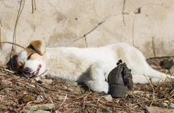 Sunny siesta for dog Royalty Free Stock Images