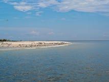 Flock of sea birds on beach Stock Photos