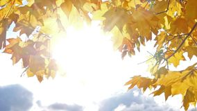 Sunny sky and maple leaves frame stock video footage