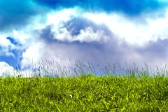 Sunny sky and poisonous grass Royalty Free Stock Image