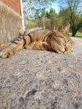 Sunny Slumber royalty-vrije stock foto's