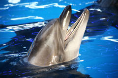 Sunny smiling dolphin Stock Image