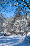 Sunny, snow-covered glade in the winter park. royalty free stock photography